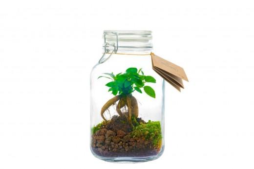 Önfenntartó dísznövény - csatos üveg - medium