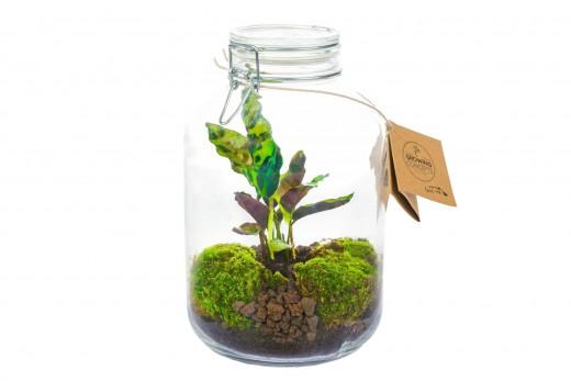 Önfenntartó dísznövény - csatos üveg - nagy