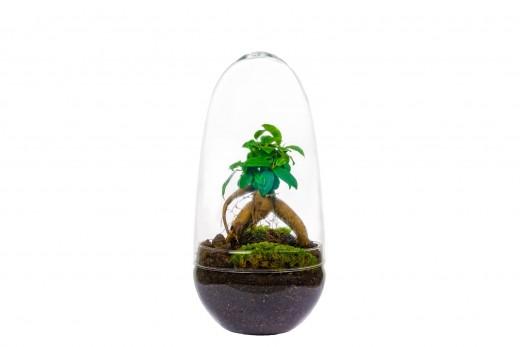 Önfenntartó dísznövény - üveg - medium