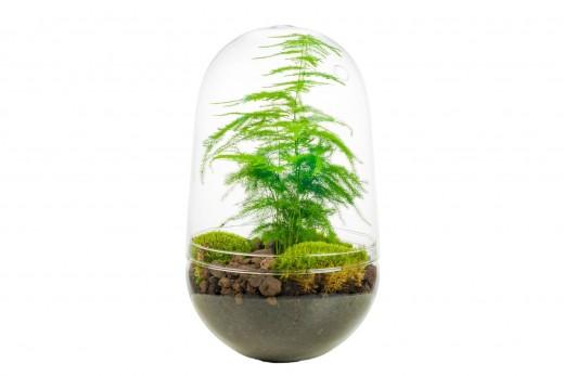 Önfenntartó dísznövény - üveg - nagy